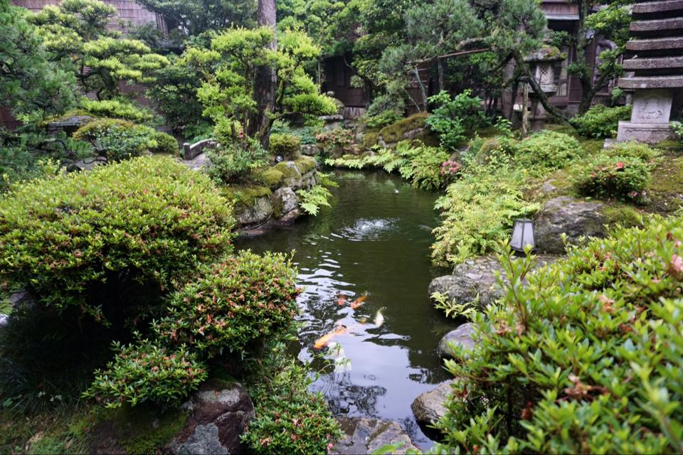 A Japanese garden with koi fish swimming in a pond.
