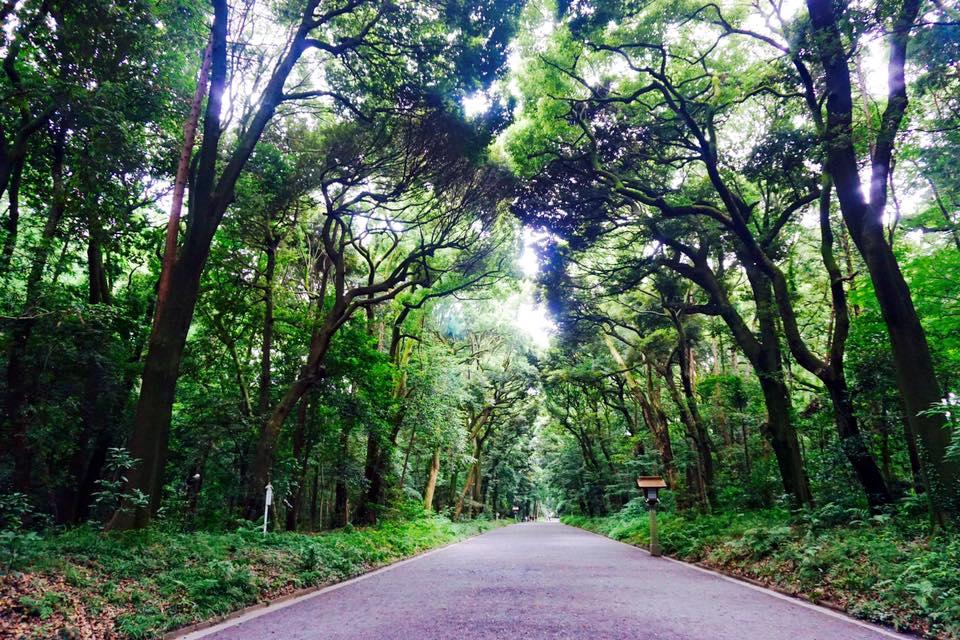yoyogi park entrance. Trees like the pathway.