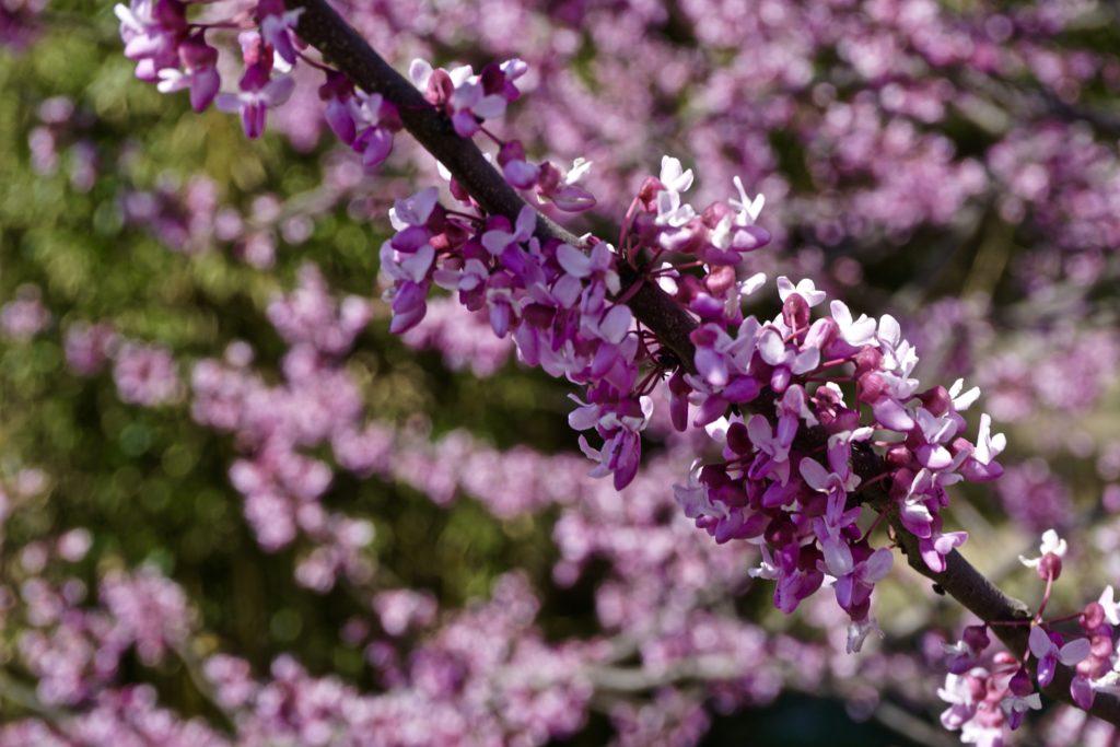 Spring at Big Cedar Lodge