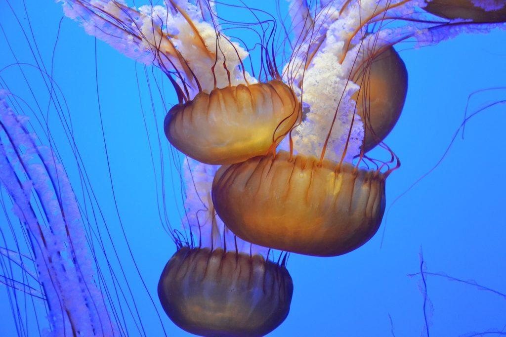 Jellyfish at the Tulsa Aquarium