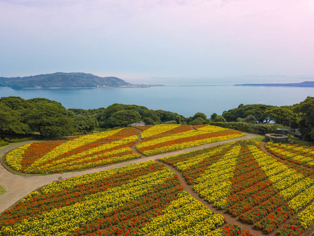 Field of yellow and orange marigold flowers at Nokonoshima Island - Fukuoka