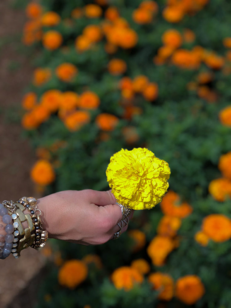 Hand holding a yellow marigold flower at Nokonoshima Island in Fukuoka, Japan