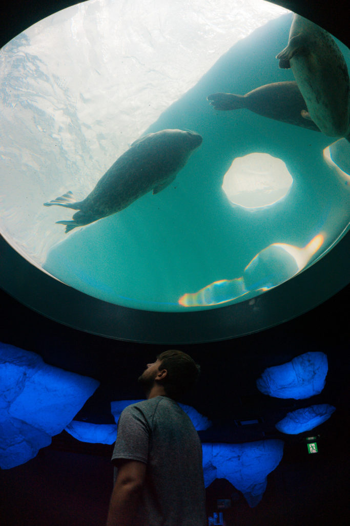 Man looking up at a tank of water with seals swimming inside at Osaka Aquarium