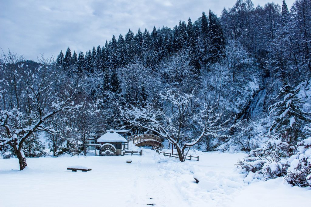 Winter in Japan, a garden is covered in snow as are the many trees in the background.