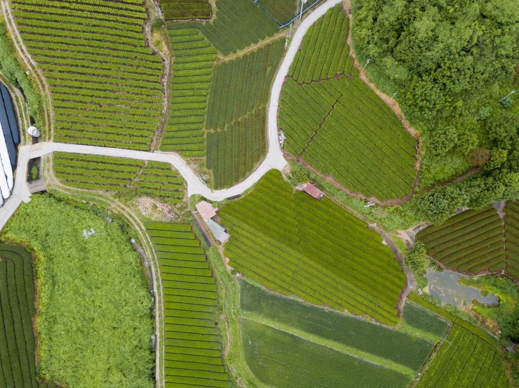 Aerial shot of wazuka tea plantation in Nara, Japan (rows and rows of green tea).