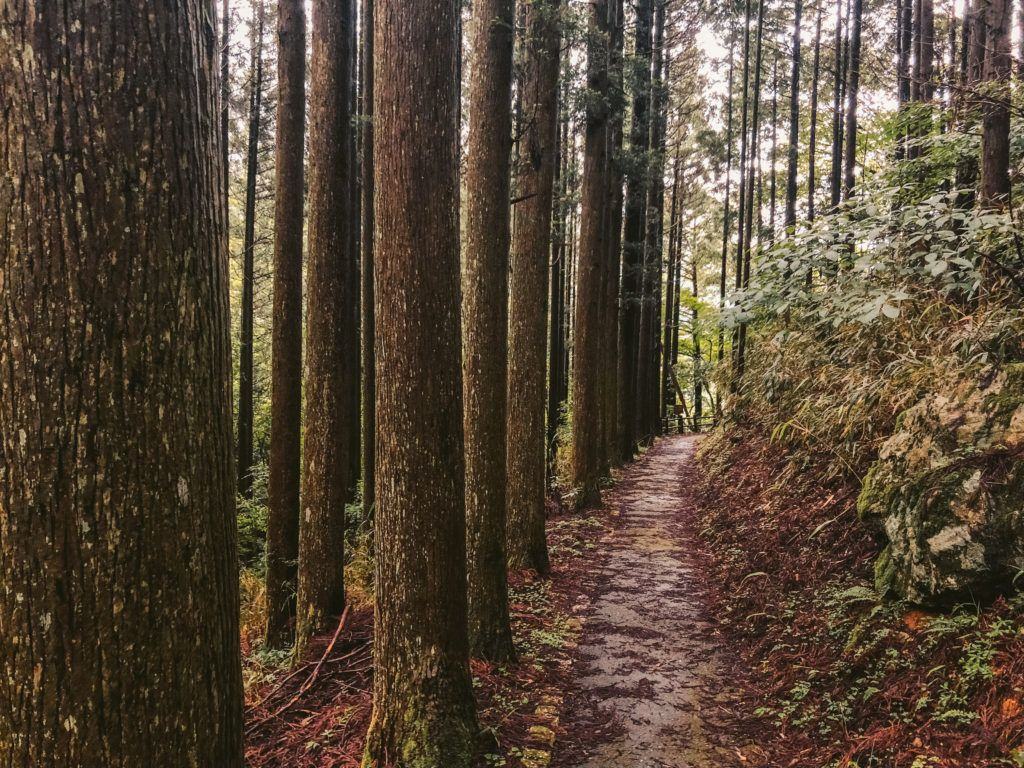 Hiking trail to Sendon Todoro (栴壇轟の滝)