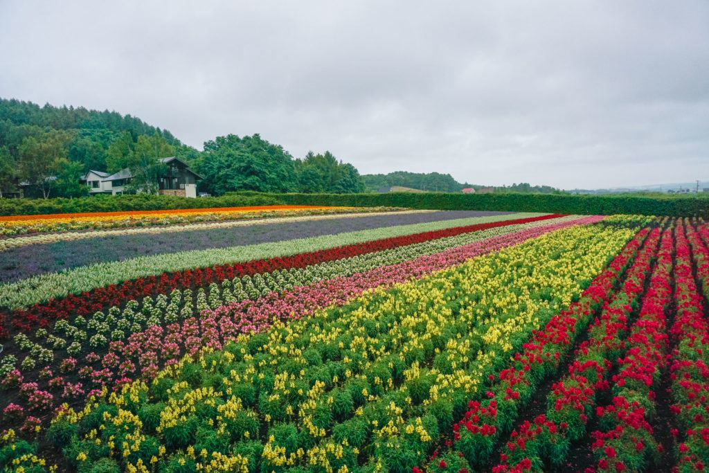 Farm Tomita - Furano Lavender Fields