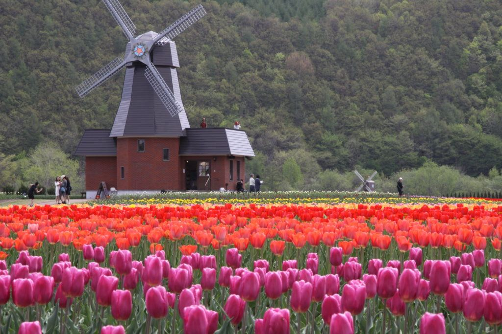 Kamiyubetsu Tulip Park - Hokkaido Flower Fields