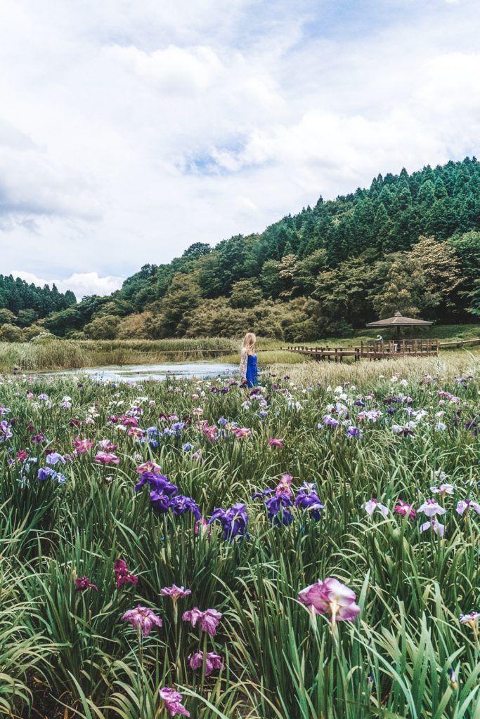 Kagurame Lake - things to do in Beppu, Japan