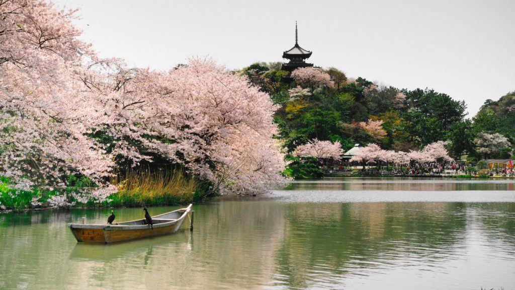 View of the pond at Sankeien Garden - Yokohama, Japan